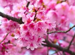 Từ vựng tiếng Nhật chủ đề thiên nhiên